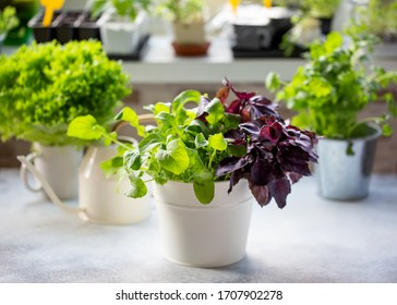 Herb Garden Windowsill Images Stock Photos Vectors Shutterstock