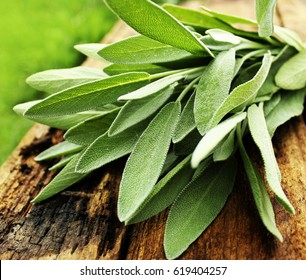 Fresh aromatic sage on old wooden background