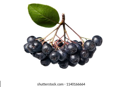 Fresh aronia berries with leaves. Aronia melanocarpa (black chokeberry) on white background.