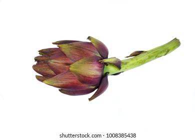 Fresh artichoke flower (Cynara scolymus)