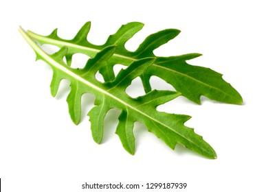 fresh arugula leaves isolated on white background