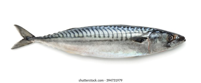 Fresh atlantic mackerel isolated on white