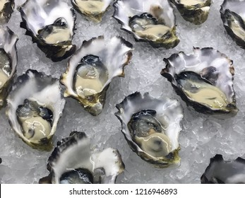 Fresh Australian oysters on ice