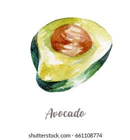 fresh avocado illustration. Hand drawn watercolor on white background.