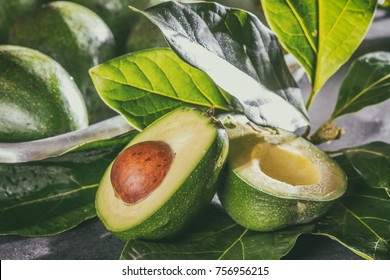 Fresh avocado with avocado tree leaves. Close up.