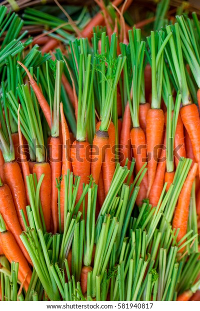 Fresh Baby carrots background nature