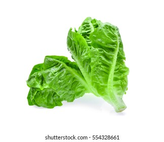 fresh baby cos,lettuce isolated on white background