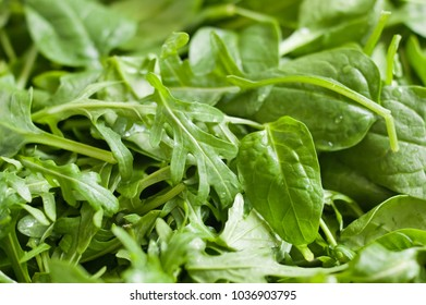 Fresh baby spinach leaves and green arugula (salad rocket, rucola) washed and ready to prepare fresh spring vegetable salad. Green natural background.