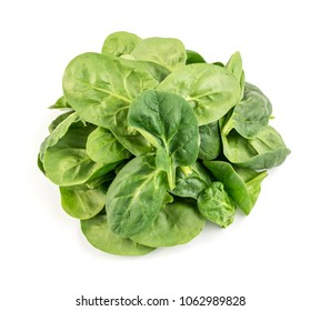 Fresh Baby Spinach Leaves Isolated. Leafy Green Vegetable Top View
