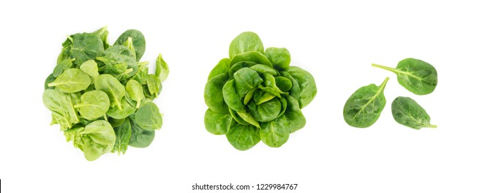 Fresh Baby Spinach Leaves Isolated. Spinacia Oleracea or Leafy Green Vegetable Top View