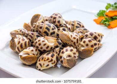 Fresh babylon snail isolated on plate white
