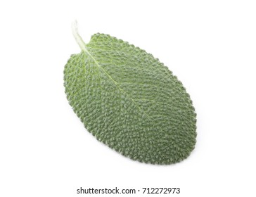 Fresh Baghdad Sage Isolated on White Background in Full Depth of Field with Clipping Path.