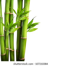 Fresh bamboo isolated on white background