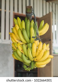 Fresh Banana hanging