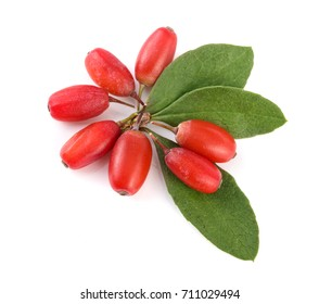 fresh barberry with leaves isolated on a white background. top view