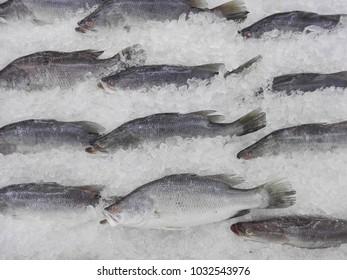 fresh barramundi on ice at the market