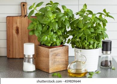 fresh basil herb in pot olive oil kitchen