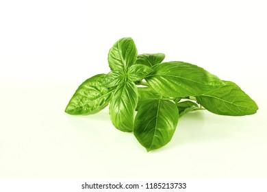 fresh basil leaf isolated on whit background