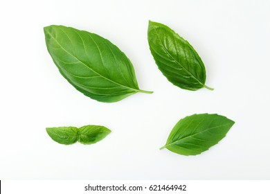 Fresh Basil Leafs Isolated on White.