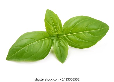 Fresh basil leaves, close-up, isolated on white background.
