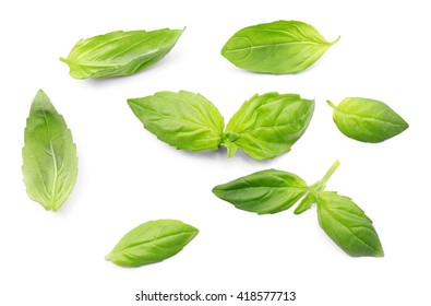 Fresh basil leaves group isolated on white