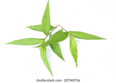 Fresh basil leaves, isolated on a white background