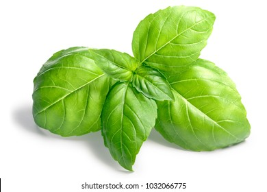 Fresh Basil leaves (Ocimum basilicum). Shadows separated, clipping path: goo.gl/qQ88ZY