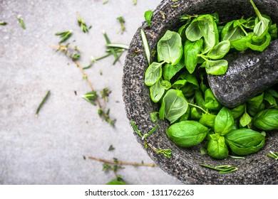 Fresh basil mint in concrete pestle or mortar.