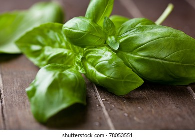Fresh basil on dark wooden background