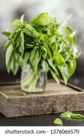 Fresh basil on a stone and dark background. Green basil. Food background. Basil plant for healthy cooking