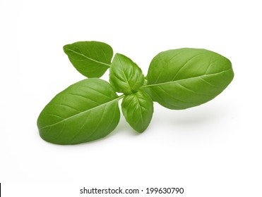 Fresh basil sprig on white surface with smooth shadows.