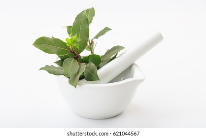 Fresh bay laurel in a mortar on white background