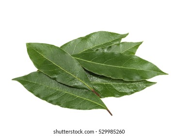 Fresh bay leaves isolated, without shadow
