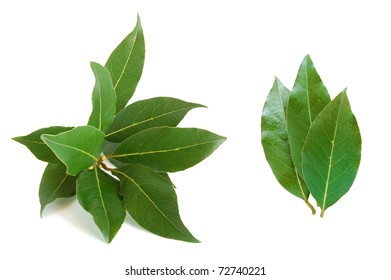 Fresh bay leaves on the white background