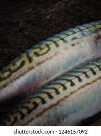 fresh beautiful mackerels on dark stone