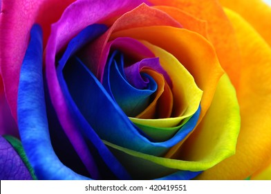 Fresh beautiful multicolor roses flower for floral background