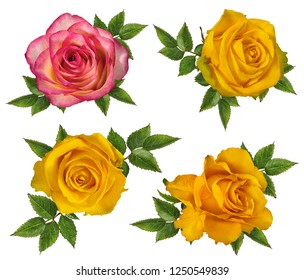 Single Yellow Rose Images Stock Photos Vectors Shutterstock