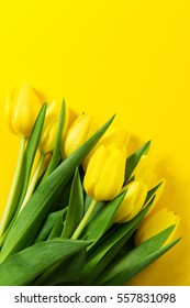 Fresh beautiful yellow tulips on yellow colorful background. Spring concept. Horizontal, top view with copy space.