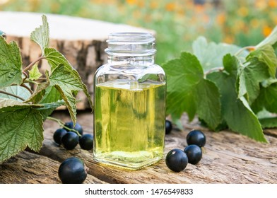 Fresh berries of black currant near glass bottles with extract. Medicinal tincture with black currant. Close-up.