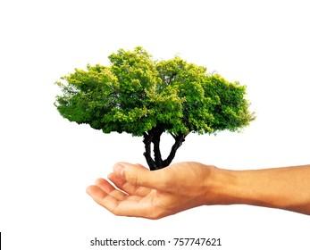 fresh big tree in hand on white background