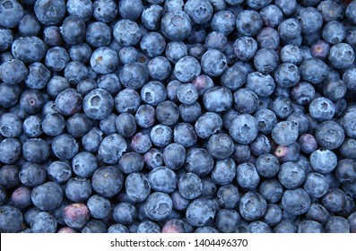 Fresh Bilberries. Close-up background. Shallow DOF
