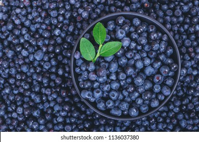 Fresh bilberries with a green branch on top in black bowl on bilberries background.  Close-up. Top view.