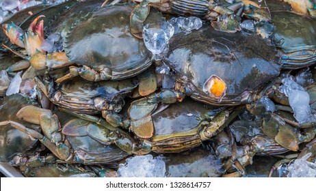 Blue Swimming Crabs Images, Stock Photos & Vectors