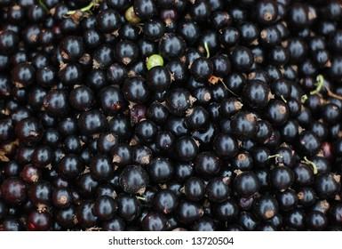 a lot of fresh black currants (ribes nigrum)