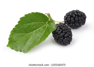 Fresh black mulberry and leaf isolated on white background