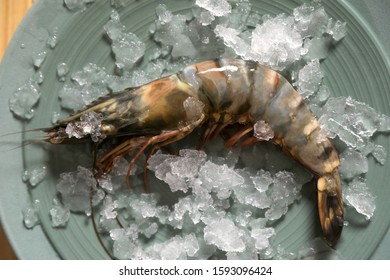 Fresh black tiger shrimp with ice on plate, top view