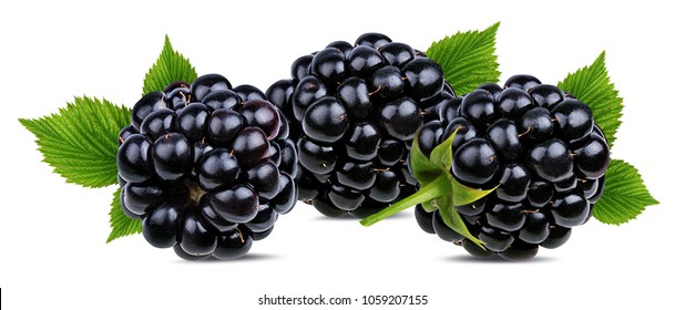 Fresh blackberry with leaf isolated on white background with clipping path