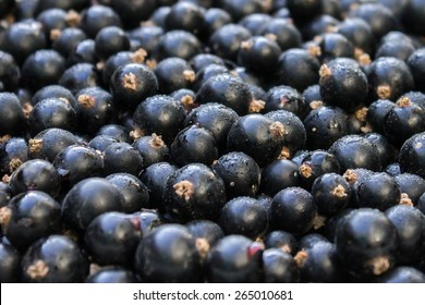 fresh blackcurrant with drops of dew, blackcurrant, background, black currant
