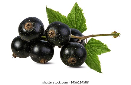 Fresh black-currants with leaf isolated on white background with clipping path
