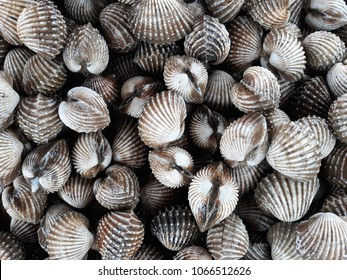 Fresh blood cockle or blood clam (Tegillarca granosa) background. Close-up of raw sea cockles clams display for sale at seafood market